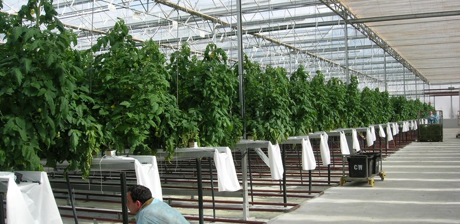 Hydroponic Advisory Systems Amp Growing Media Commercial